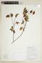 Maprounea guianensis Aubl., BOLIVIA, F