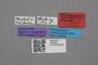 2819288 Trichopsenius californicus HT labels IN