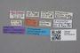 2819290 Leptusa curiosa ST labels IN