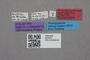 2819291 Rhinotermopsenius saltatorius HT labels IN