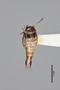 2819291 Rhinotermopsenius saltatorius HT d IN