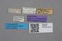 2819294 Edaphus philippinus ST labels IN