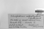 Scleropodium touretii image