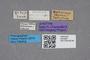 2819298 Edaphus pubescens ST labels IN
