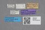 2819302 Edaphus scheerpeltzi ST labels IN