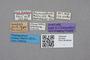 2819304 Brouniellum majus ST  labels IN