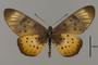124202 Acraea sp d IN