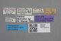 2819308 Brouniellum hirtellum ST labels IN