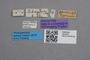 2819310 Ischnoderus bruchi HT labels IN
