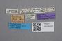 2819311 Phyllodrepa sharpi ST labels IN