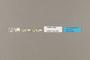 124205 Acraea sp labels IN
