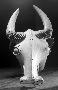 175620: Wood mask depicting Buffalo;