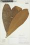 Naucleopsis humilis C. C. Berg, PERU, F