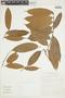 Naucleopsis inaequalis (Ducke) C. C. Berg, BRAZIL, F