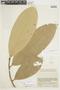 Naucleopsis naga Pittier subsp. naga, COLOMBIA, F