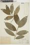 Trymatococcus amazonicus Poepp. & Endl., PERU, F