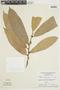Naucleopsis krukovii (Standl.) C. C. Berg, BRAZIL, F