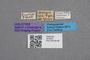 2819334 Bledius fischeri HT labels IN