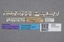 2819336 Bledius michaelseni ST labels IN