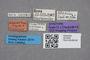 2819340 Bledius latior ST labels IN