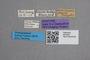 2819350 Bledius maritimus ST labels IN