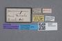 2819355 Priochirus propinquus ST labels IN