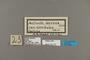 124153 Altinote alcione corduba labels IN