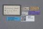 2819357 Priochirus kuluensis HT labels IN