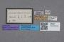 2819358 Priochirus novaebrittaniae ST labels IN