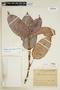 Vaupesia cataractarum R. E. Schult., COLOMBIA, F