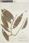 Annona reticulata image