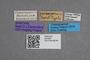 2819361 Priochirus pentagonalis ST labels IN