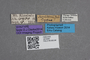 2819363 Priochirus moultoni ST labels IN