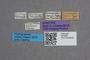 2819365 Bledius fernandezi ST labels IN