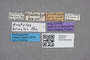 2819373 Oxytelus bruchi HT labels IN