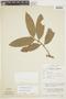 Duguetia quitarensis Benth., PERU, F