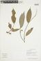Duguetia quitarensis Benth., GUYANA, F