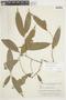 Duguetia quitarensis Benth., BRAZIL, F