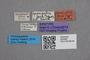 2819392 Calodera strandi ST labels IN