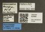 62990 Aphaenogaster ensifera L IN