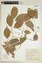 Bunchosia cornifolia image