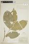 Bunchosia hookeriana A. Juss., PERU, F