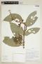 Bunchosia hookeriana A. Juss., ECUADOR, F