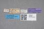 2819394 Stenus argentinus HT labels IN