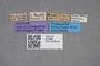 2819395 Stenus brasilianus ST labels IN