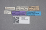 2819396 Stenus titicacanus HT labels IN