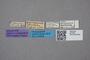 2819397 Stenus parvipennis HT labels IN