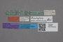 2819382 Oxytelus peruvianus ST labels IN