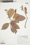 Byrsonima crassifolia (L.) Kunth, VENEZUELA, F