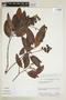 Byrsonima crassifolia (L.) Kunth, BRAZIL, F